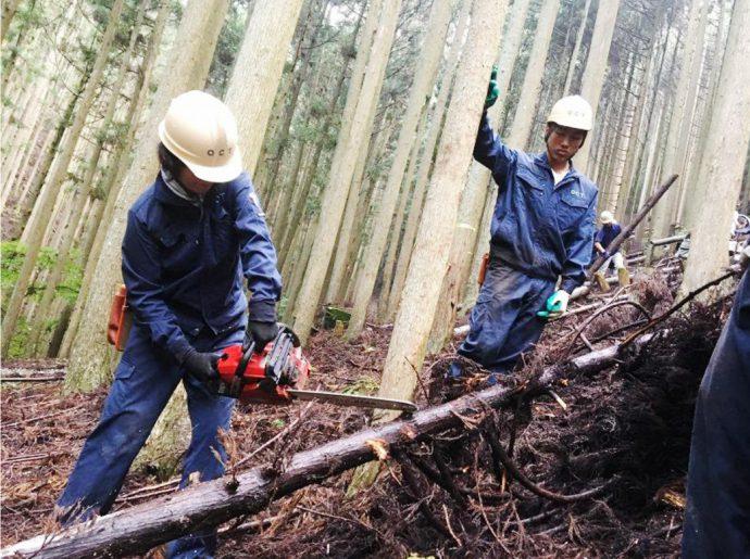photo: 1年生・2年生合同 林業研修